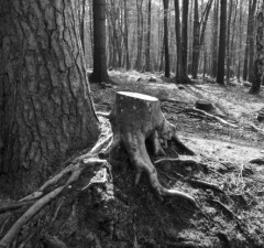 wycinanie drzew