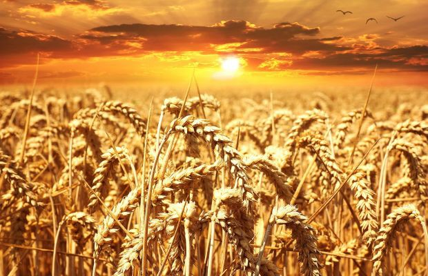 wiadomosci-rolnictwo
